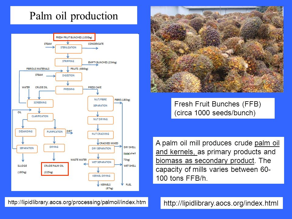 Palm oil production Fresh Fruit Bunches (FFB) (circa 1000 seeds/bunch)