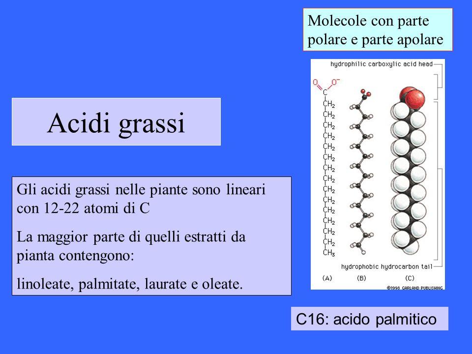 Acidi grassi Molecole con parte polare e parte apolare