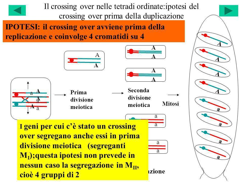 Il crossing over nelle tetradi ordinate:ipotesi del crossing over prima della duplicazione
