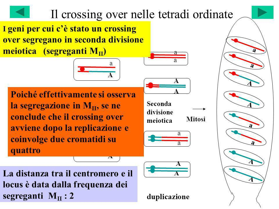 Il crossing over nelle tetradi ordinate