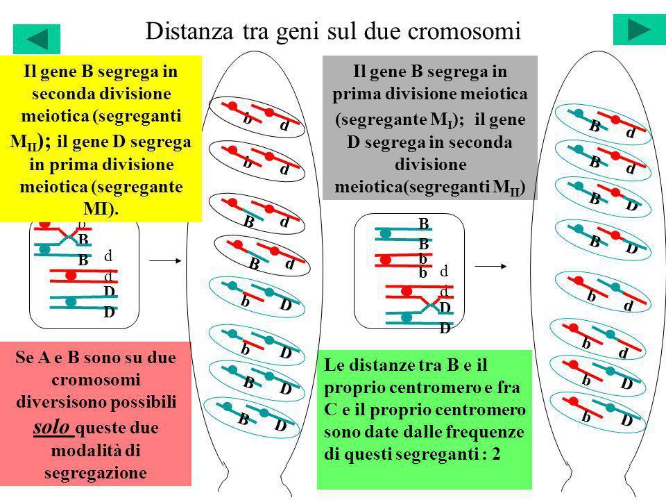Distanza tra geni sul due cromosomi