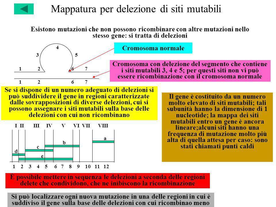 Mappatura per delezione di siti mutabili