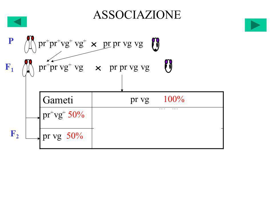 ASSOCIAZIONE Gameti pr+pr+vg+ vg+ pr pr vg vg P F1 pr+pr vg+ vg