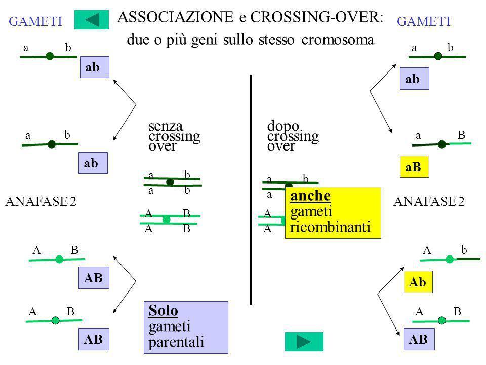ASSOCIAZIONE e CROSSING-OVER: due o più geni sullo stesso cromosoma
