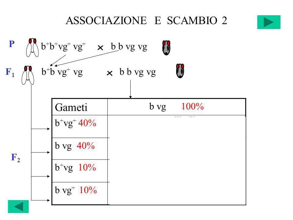 ASSOCIAZIONE E SCAMBIO 2