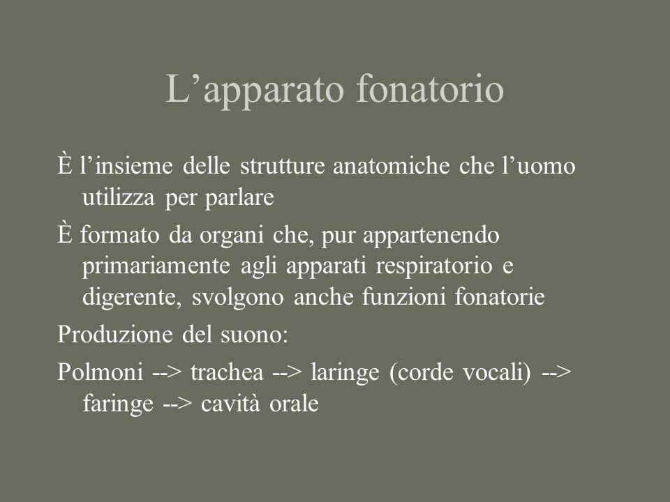 L'apparato fonatorio È l'insieme delle strutture anatomiche che l'uomo utilizza per parlare.