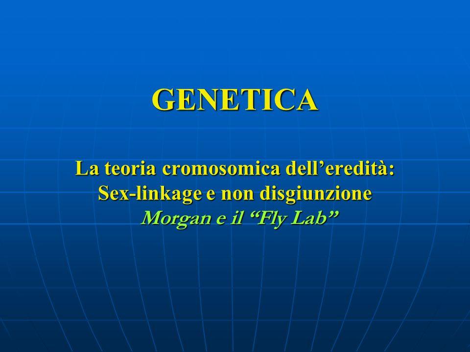 GENETICA La teoria cromosomica dell'eredità: Sex-linkage e non disgiunzione Morgan e il Fly Lab