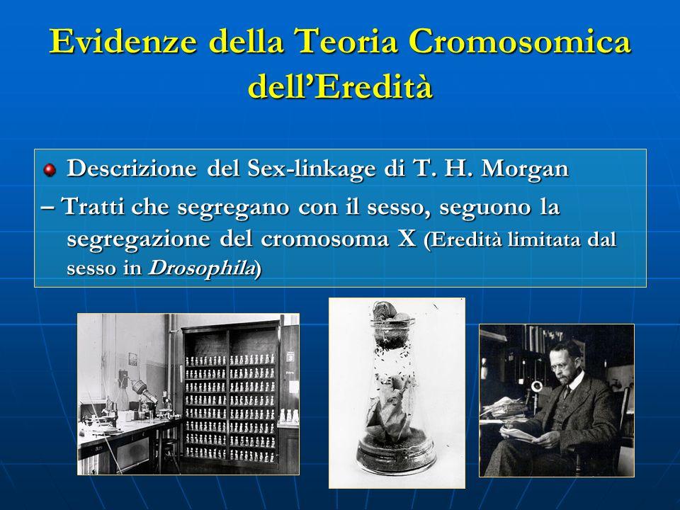 Evidenze della Teoria Cromosomica dell'Eredità