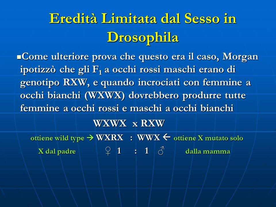Eredità Limitata dal Sesso in Drosophila