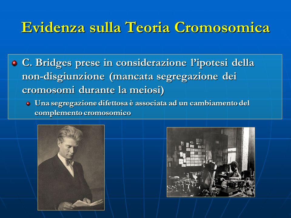 Evidenza sulla Teoria Cromosomica