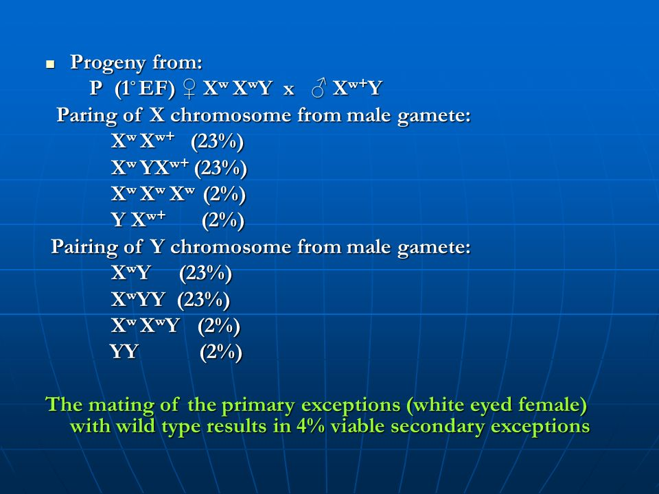 Progeny from: P (1◦ EF) ♀ Xw XwY x ♂ Xw+Y. Paring of X chromosome from male gamete: Xw Xw+ (23%)