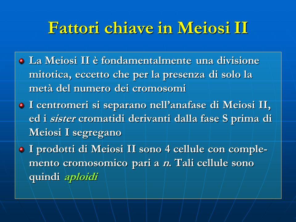Fattori chiave in Meiosi II