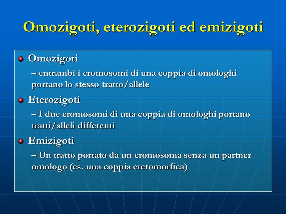 Omozigoti, eterozigoti ed emizigoti