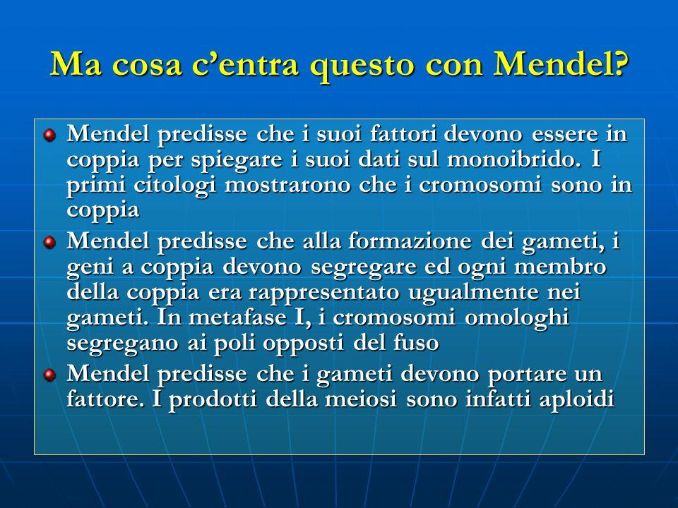 Ma cosa c'entra questo con Mendel