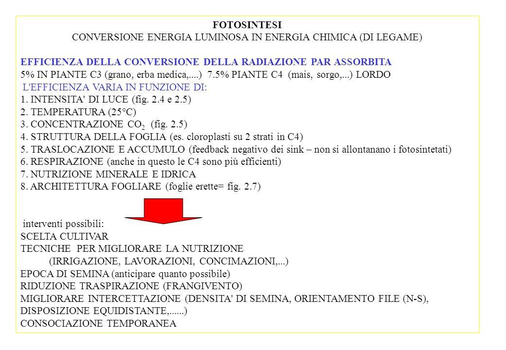 CONVERSIONE ENERGIA LUMINOSA IN ENERGIA CHIMICA (DI LEGAME)