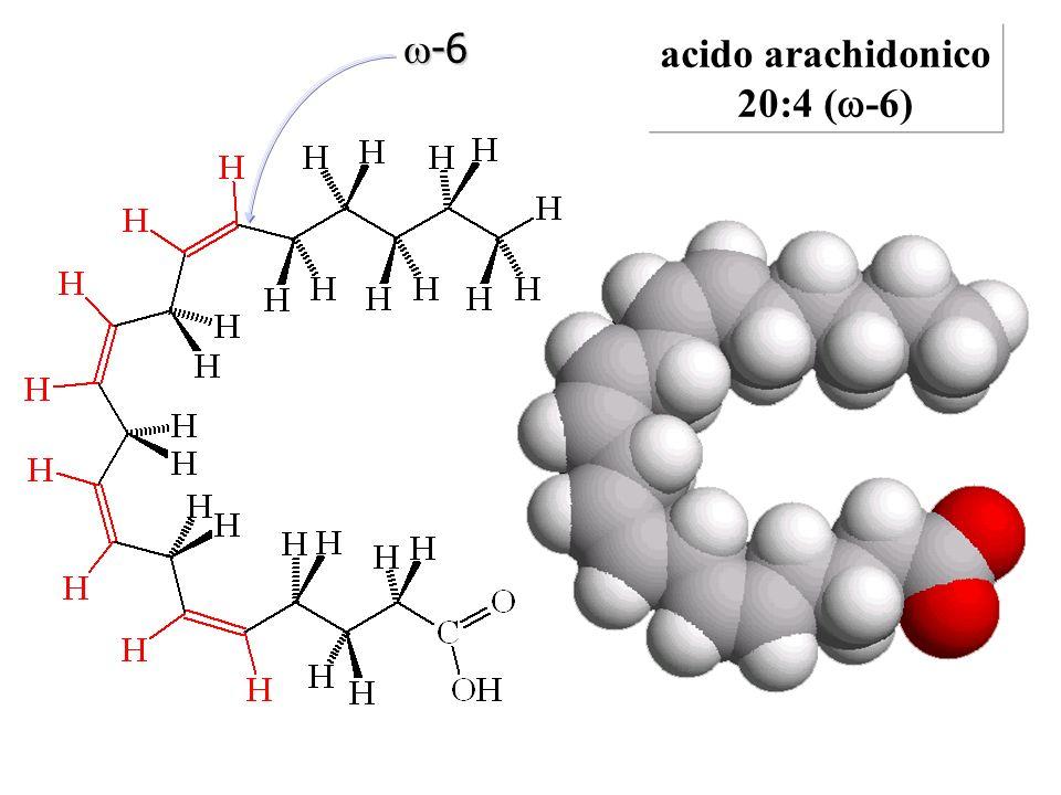 w-6 acido arachidonico 20:4 (w-6)