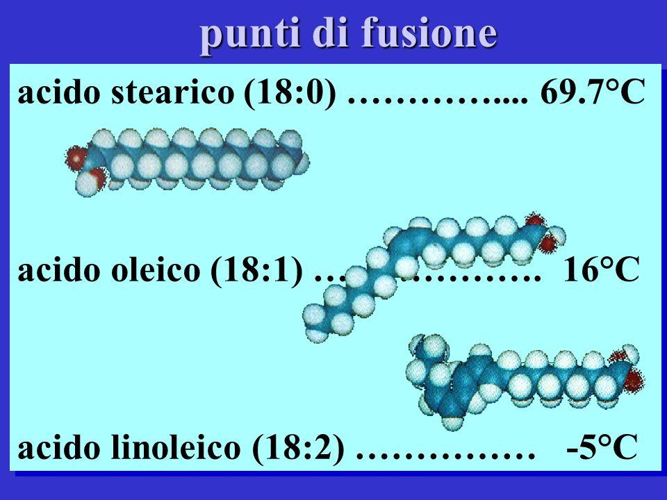 punti di fusione acido stearico (18:0) ………….... 69.7°C