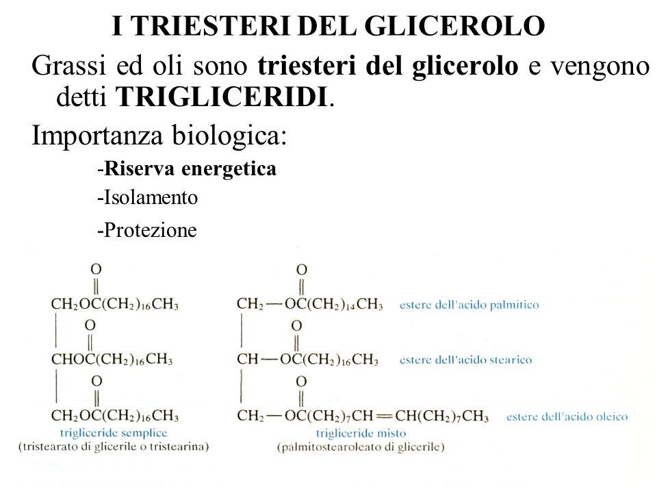 I TRIESTERI DEL GLICEROLO