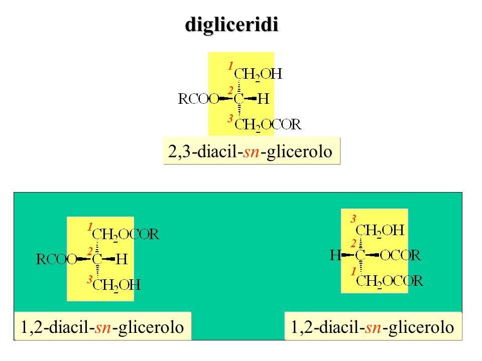 digliceridi 2,3-diacil-sn-glicerolo 1,2-diacil-sn-glicerolo
