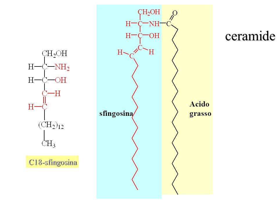 C H 2 O N ceramide Acido grasso sfingosina C18-sfingosina