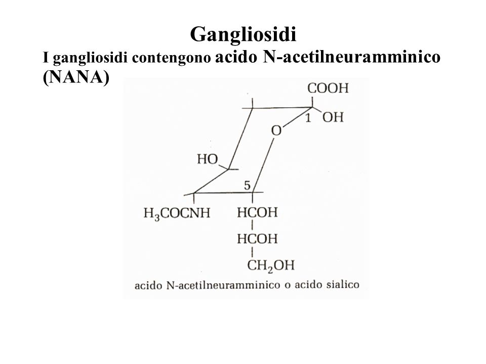 Gangliosidi I gangliosidi contengono acido N-acetilneuramminico (NANA)