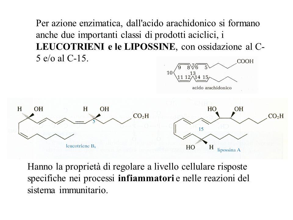 Per azione enzimatica, dall acido arachidonico si formano anche due importanti classi di prodotti aciclici, i LEUCOTRIENI e le LIPOSSINE, con ossidazione al C-5 e/o al C-15.