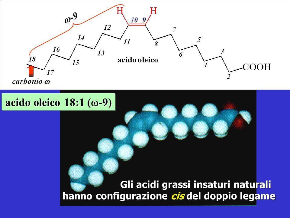 acido oleico 18:1 (w-9) w-9 Gli acidi grassi insaturi naturali
