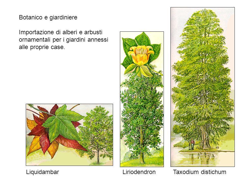 Botanico e giardiniere