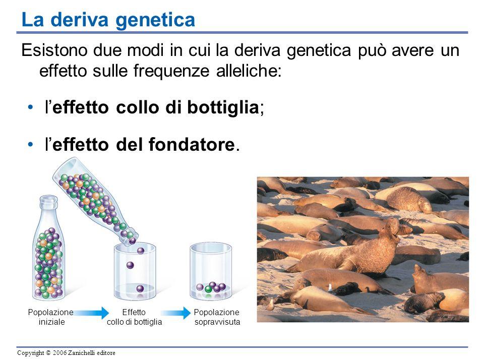 La deriva genetica l'effetto collo di bottiglia;