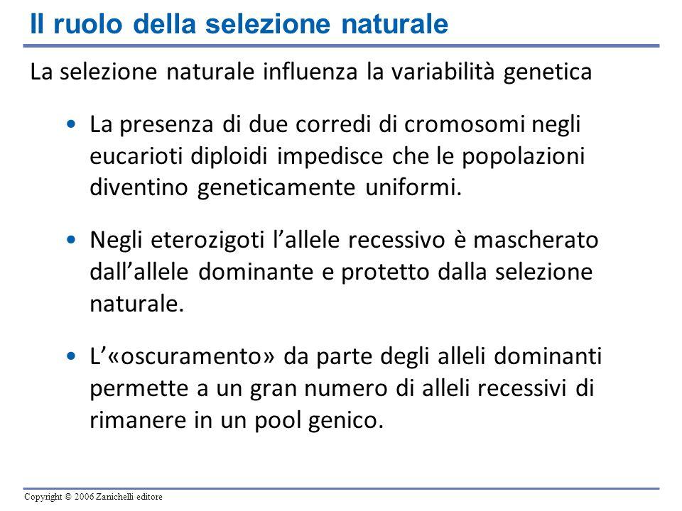 Il ruolo della selezione naturale