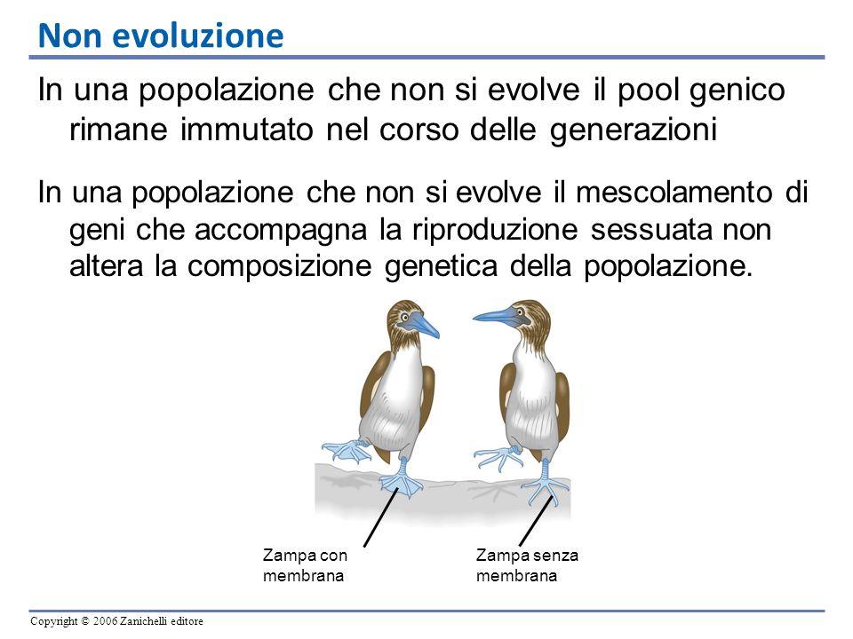 Non evoluzione In una popolazione che non si evolve il pool genico rimane immutato nel corso delle generazioni.