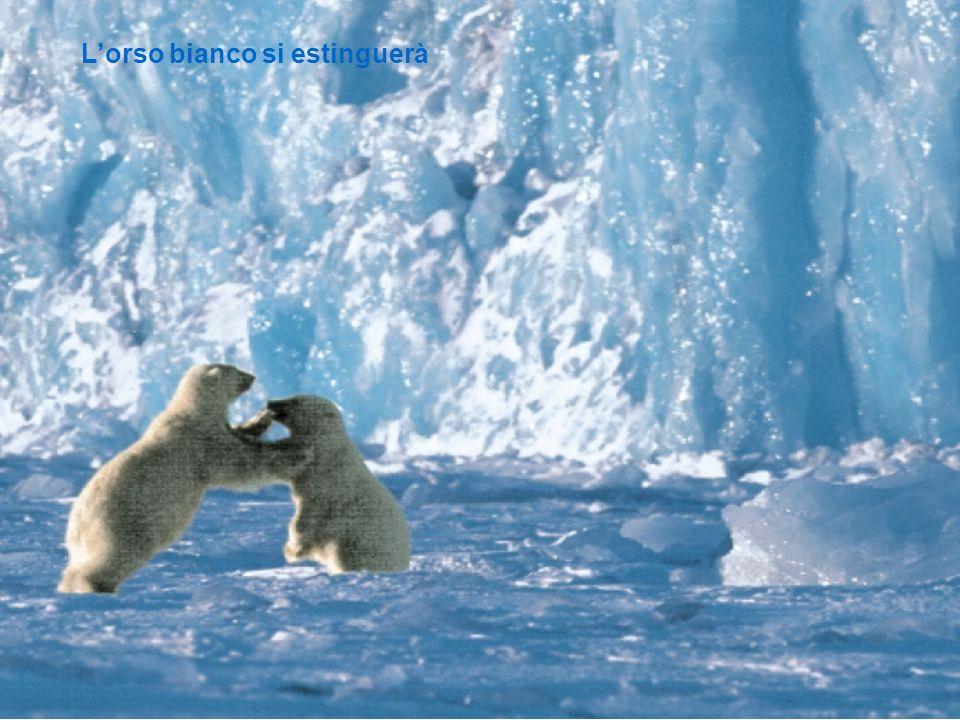 L'orso bianco si estinguerà