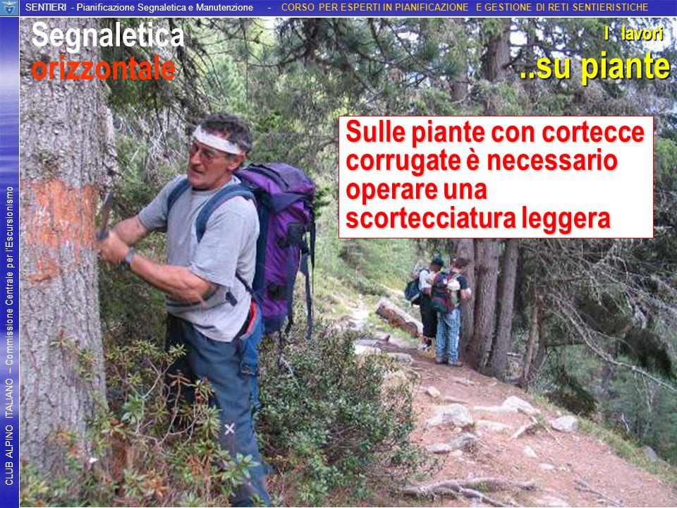 ..su piante Segnaletica orizzontale