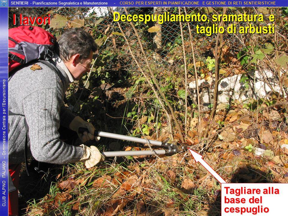 I lavori I lavori Decespugliamento, sramatura e taglio di arbusti