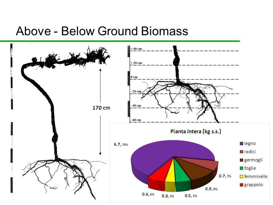 Above - Below Ground Biomass