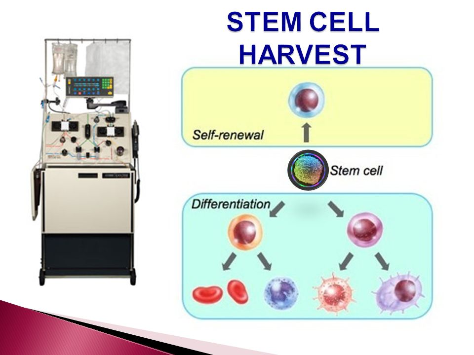 STEM CELL HARVEST