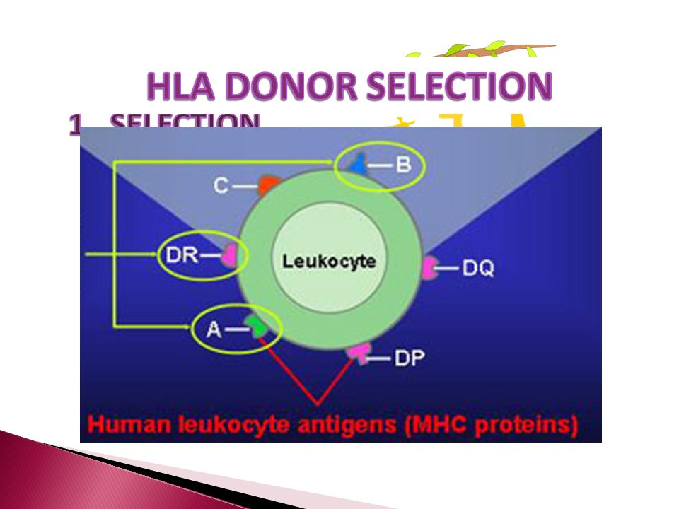 HLA DONOR SELECTION 1. SELECTION