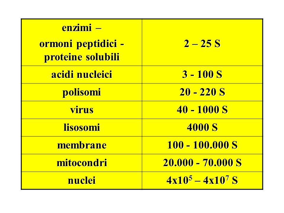 ormoni peptidici - proteine solubili