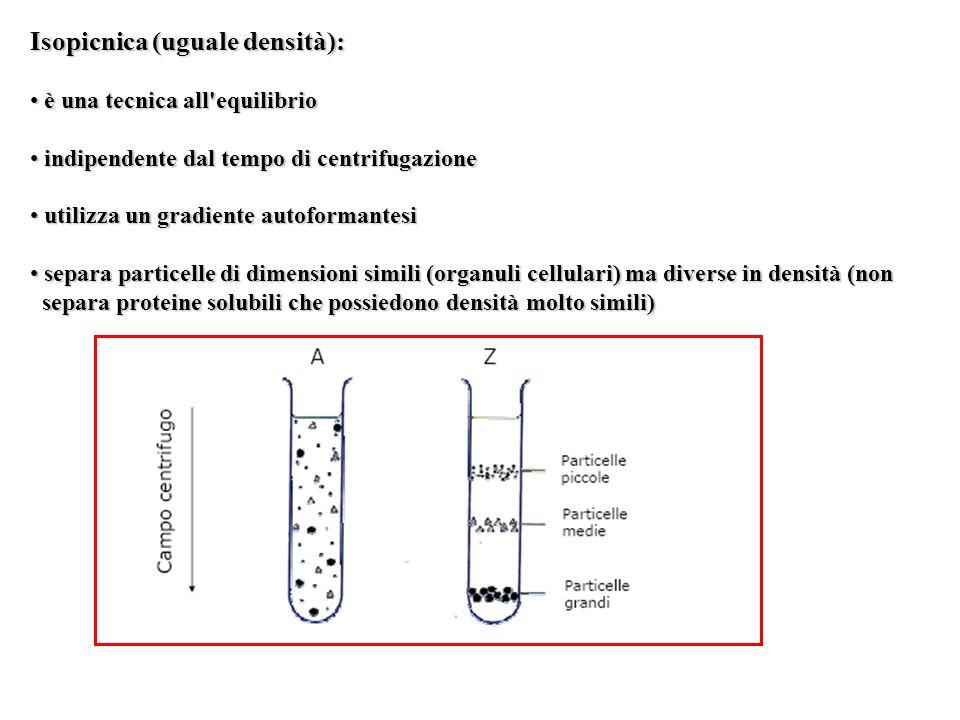 Isopicnica (uguale densità):