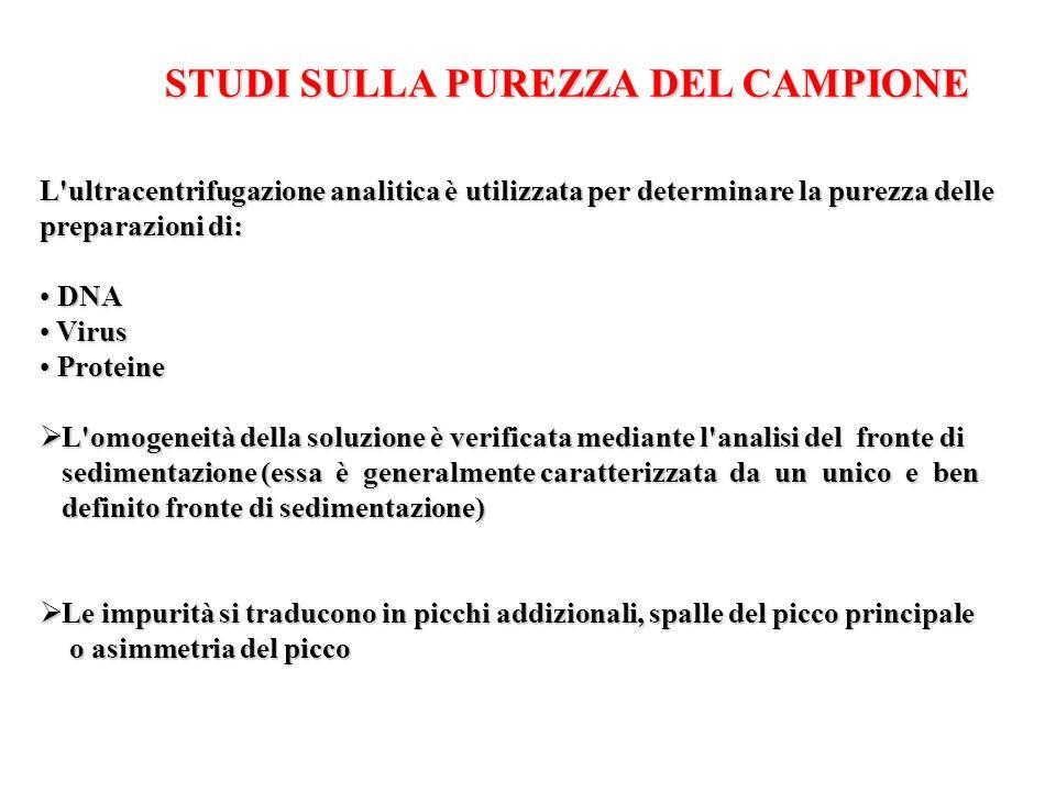 STUDI SULLA PUREZZA DEL CAMPIONE
