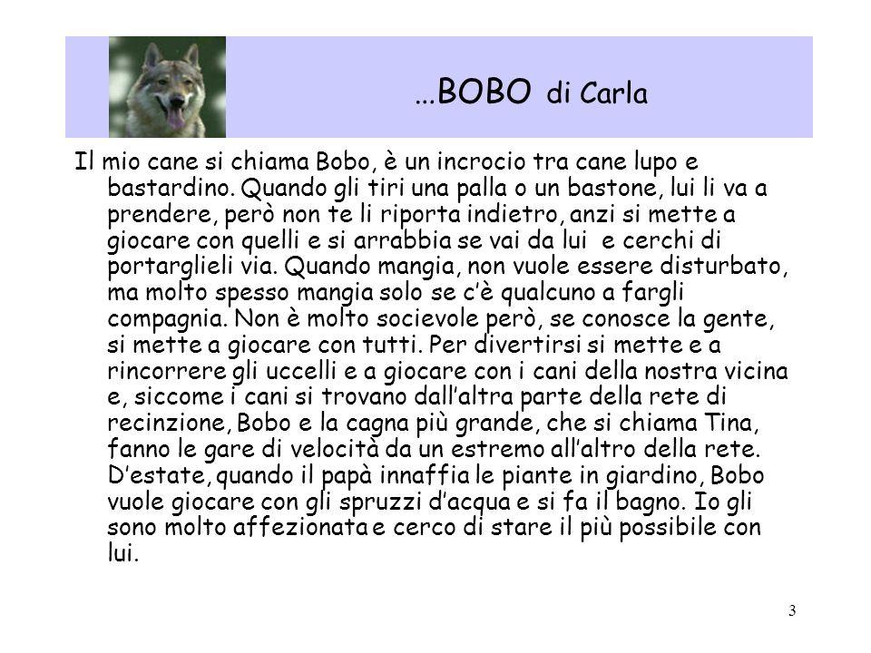 …BOBO di Carla