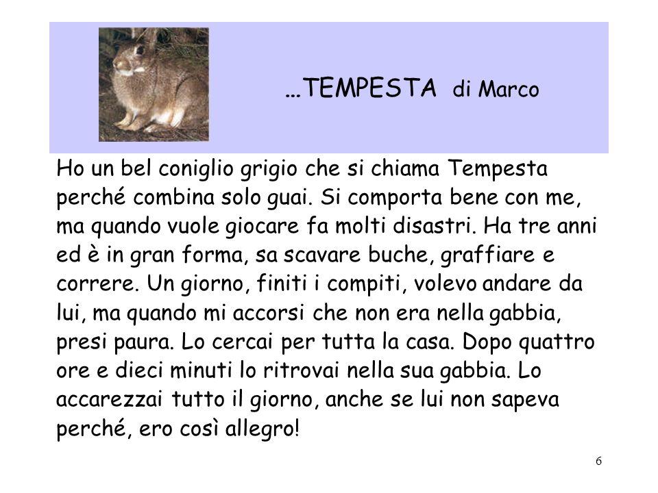 …TEMPESTA di Marco Ho un bel coniglio grigio che si chiama Tempesta