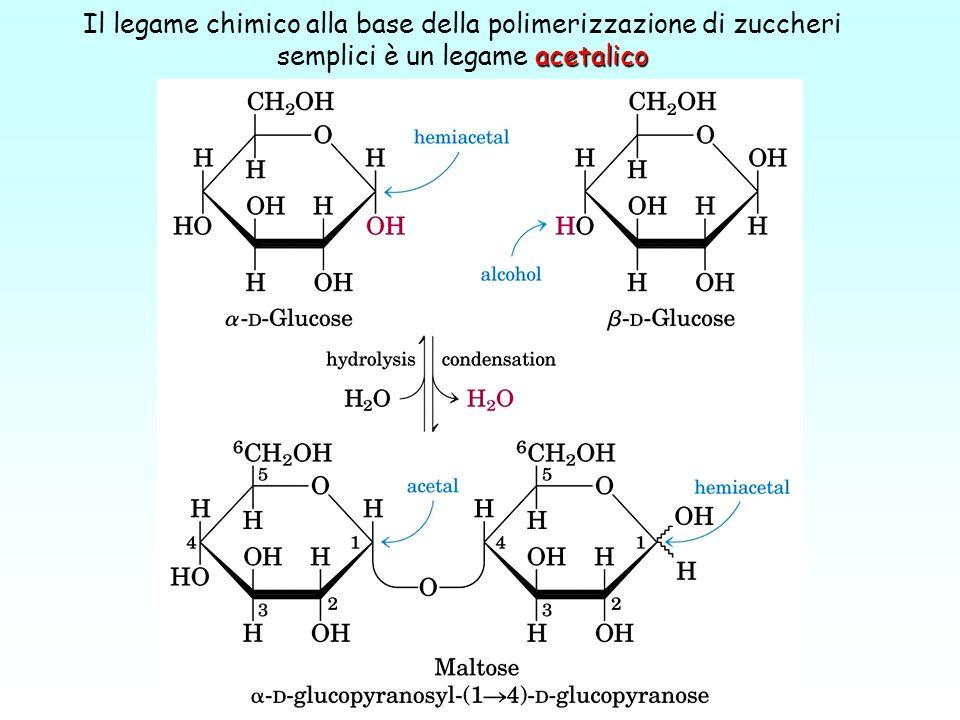 Il legame chimico alla base della polimerizzazione di zuccheri semplici è un legame acetalico