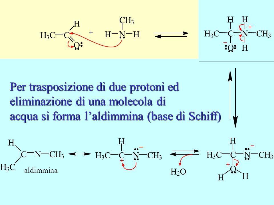 L'ammina conduce un attacco nucleofilo sul carbonio carbonilico