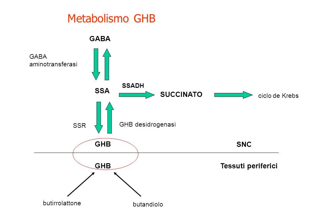 Metabolismo GHB GABA SSA SUCCINATO GHB SNC GHB Tessuti periferici