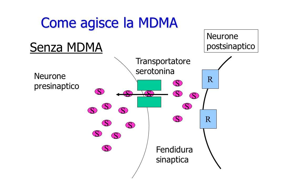 Come agisce la MDMA Senza MDMA R Neurone postsinaptico Transportatore