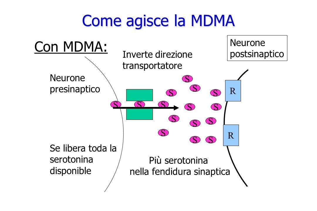 nella fendidura sinaptica
