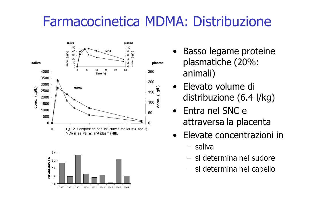 Farmacocinetica MDMA: Distribuzione