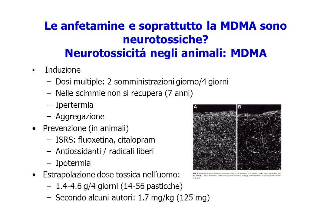 Le anfetamine e soprattutto la MDMA sono neurotossiche