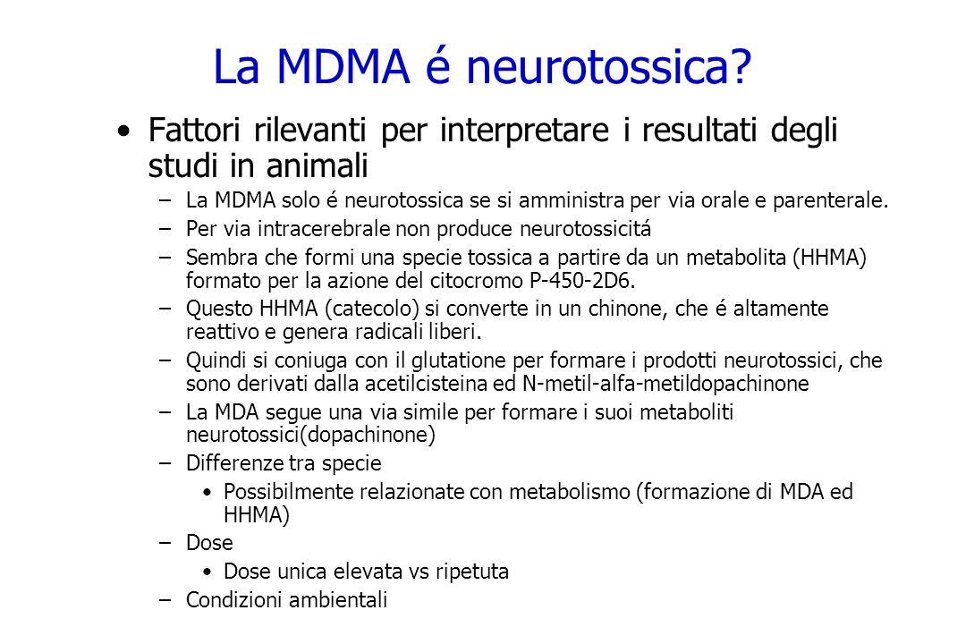 La MDMA é neurotossica Fattori rilevanti per interpretare i resultati degli studi in animali.